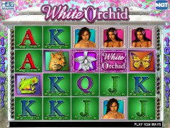 White Orchid - IGT Interactive